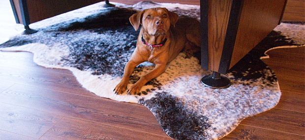 2. What Areas of My Home Are LVT and LVP Appropriate for?