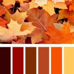 Fall colors that correspond to the falling leaves