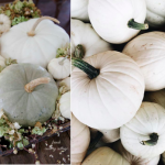 decorate using white pumpkins